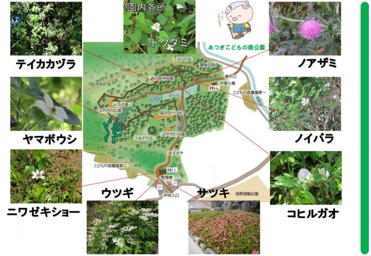 園内の花々_地図
