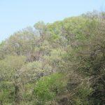 あつぎこどもの森は、今萌木の季節