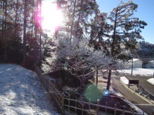 2月11日当園の雪化粧