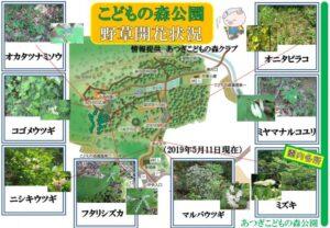 5月の公園内の開花情報