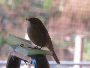 鳥さんが遊びに来ました!!