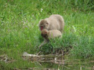 サルの親子 来園