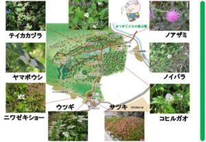 園内の花々